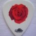 Guitar Pick - Rose - Greg Hetson - Front (504x580)